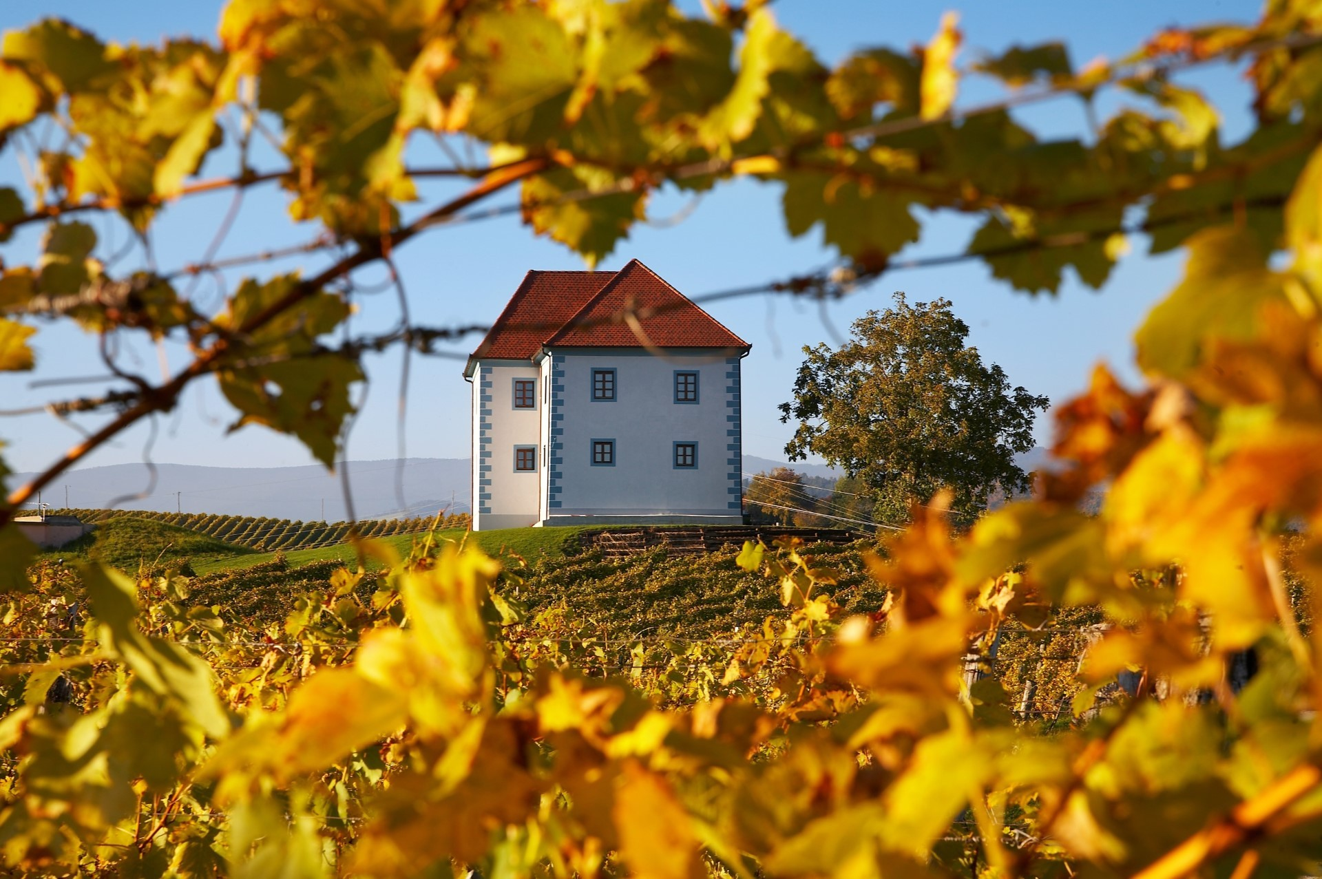 Vinogradniški dvorec med vinogradom